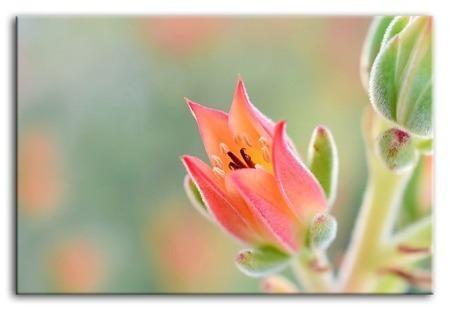 Kwiaty-reprodukcja płótno 60x90 cm